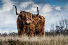 bull-1575005__180